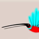 Kolibri erraldoia 2