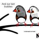 The birdies