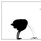 Considérations ornitho-logiques