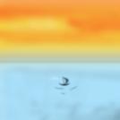 Life on sea