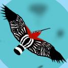 Argi-oilar arrotzekoa 2  -Exotic hoopoe 2