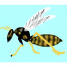 Liztorra. Wasp