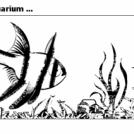 Life in the aquarium ...