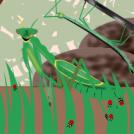 Marisorginak - Mantis
