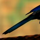 Mika - Magpie 6