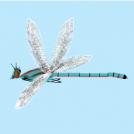 Burruntzia - Dragonfly