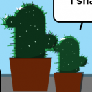 Things of cactuses