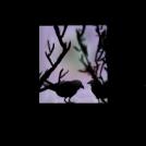 Black birds