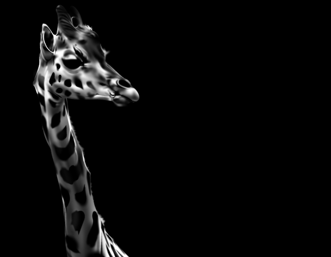 images of nature: the giraffe