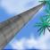 Palma de Cera del Quindio