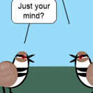 Mind Plover Matter