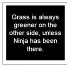 Ninjy Factoids #3