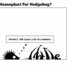 Houseplant For Hedgehog?