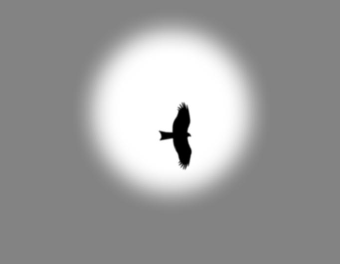 Miru Beltza - Black Kite