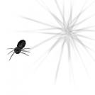 Pequeña niña araña