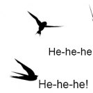 Funny Swallows