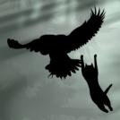 eagle vs cat
