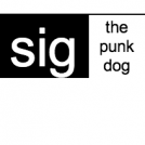 sig, the punk dog