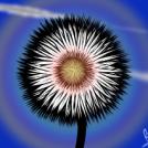 Fiore Della Notte