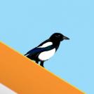 Mikak 2 - Magpies 2