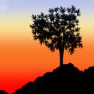 Arboreal Silhouette
