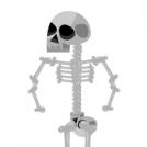 Costea, vertebrea, femur, humerus, axis, atlas