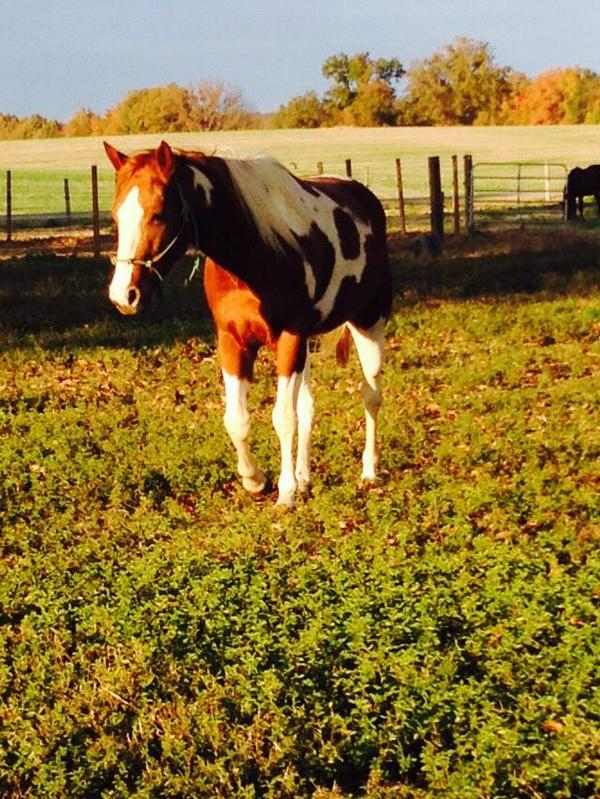 beautiful horse grazing