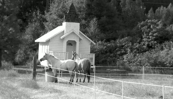 horses by chapel