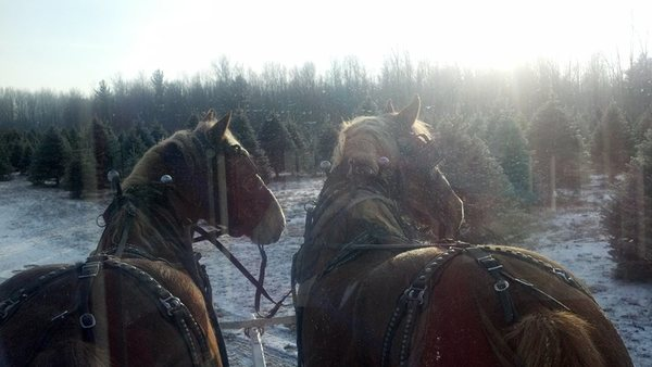 great horses