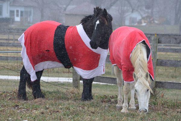 santa horses