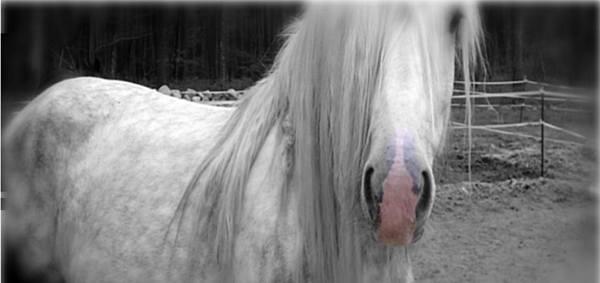 wonderful horse