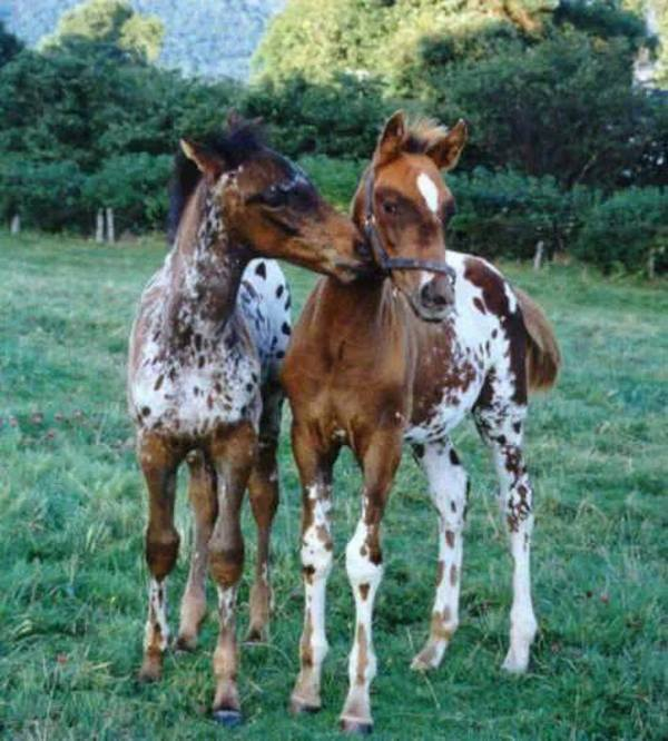 playful horses