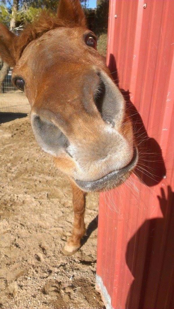 adorable horse