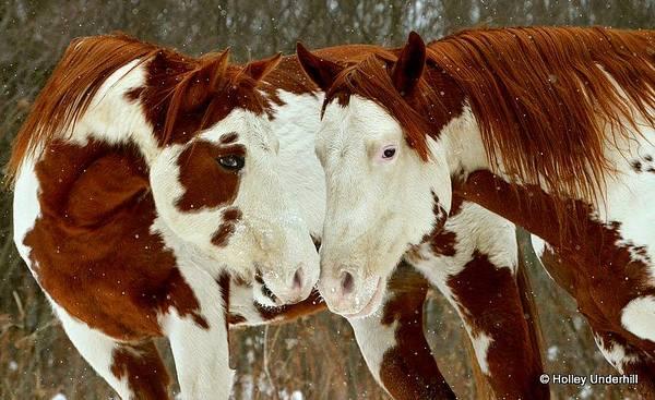 two fun horses
