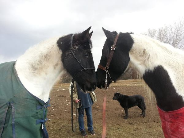 two sweet horses