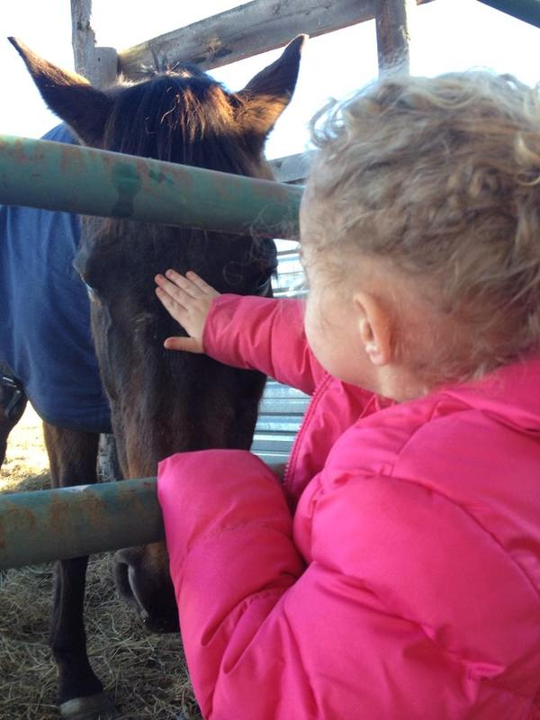 kind horse
