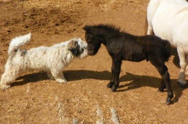 puppy and pony