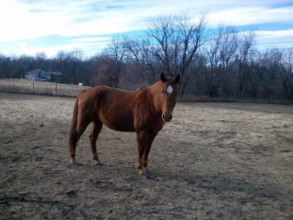 fantastic horse