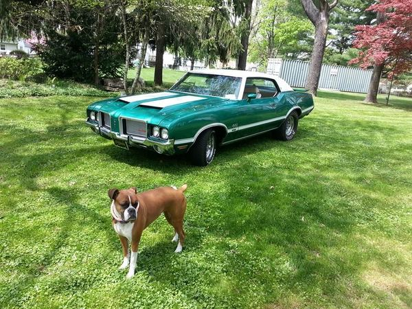 sweet car and dog