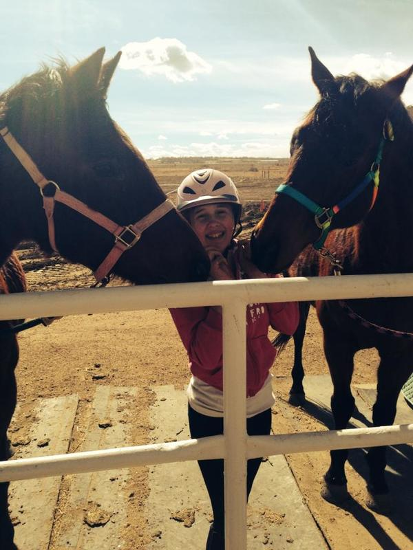 two cute horses