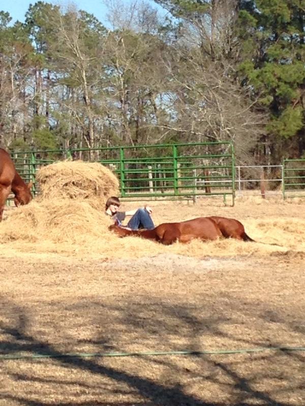 horse in hay