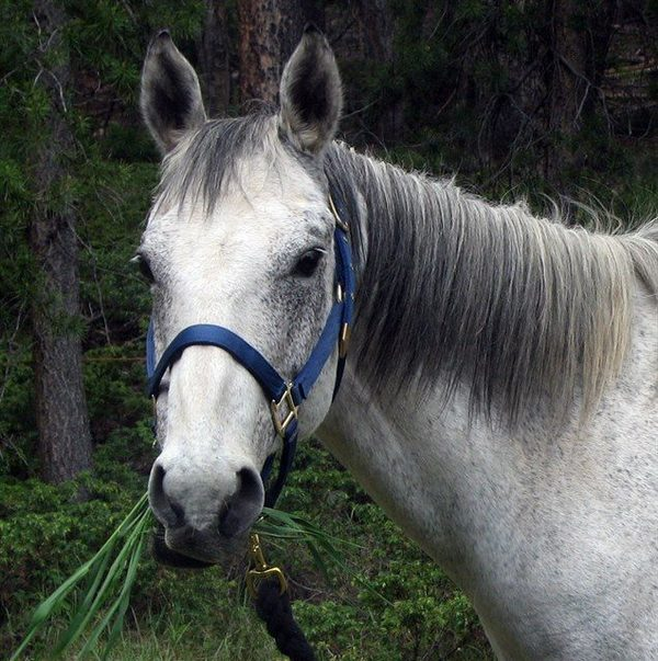 awesome horse
