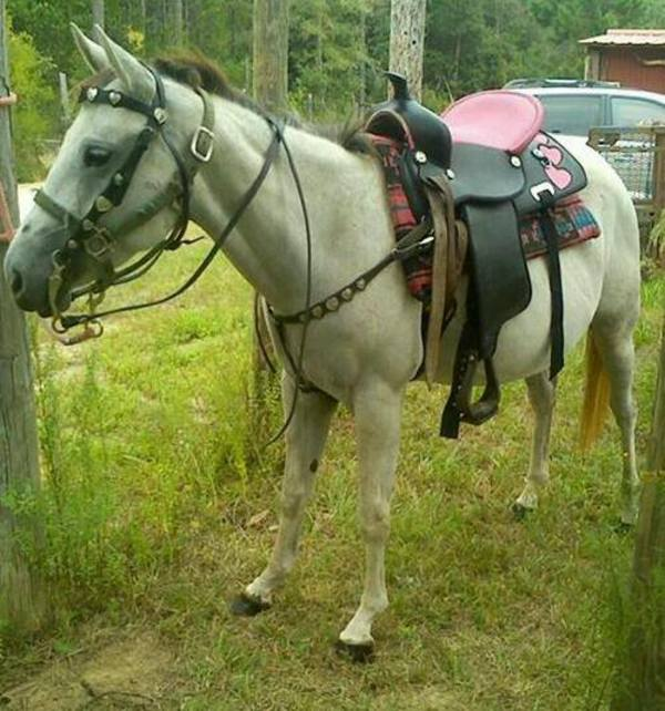 saddled horse