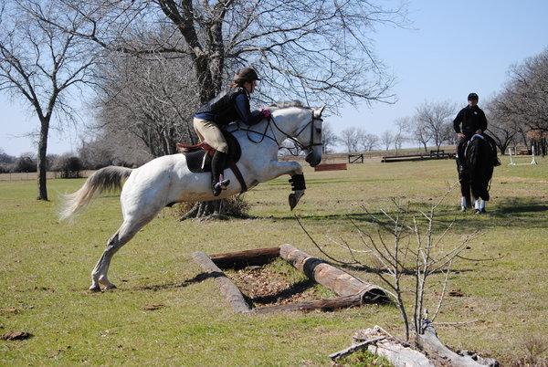 horse umping