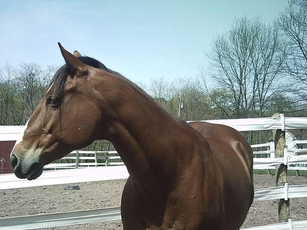 equestrian tack