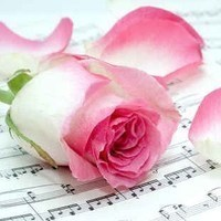Pink rose on sheet mus 7 fotolia 4972686