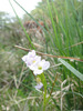 Wild_flower_6