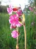Wild_flower_9
