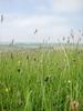 Field Grass 2