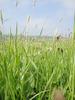 Field Grass 3